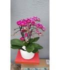 Orchidée 6 branches